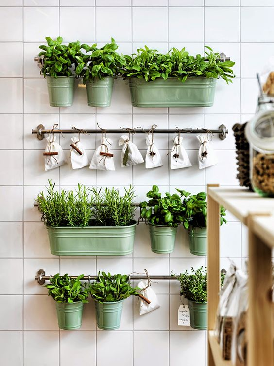 grow-some-plants-on-your-kitchen