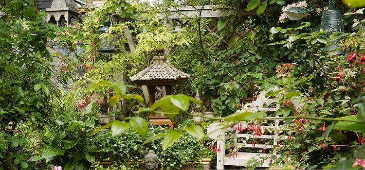 home garden plants