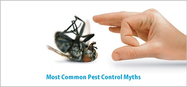 Common Pest Control Myths