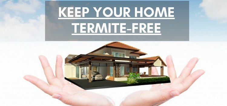 Termite Free home