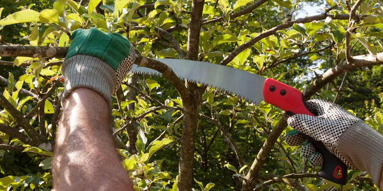 A pruning saw