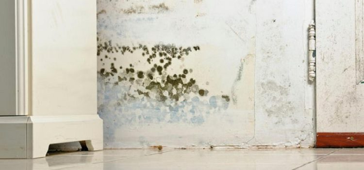 Mold in home Walls