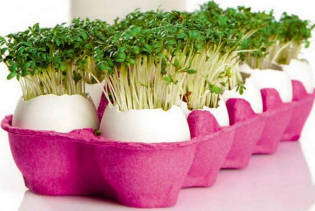 DIY craft ideas eggs carton for the table gardening