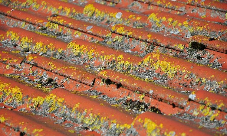 roof inspection | how to inspect roof damage