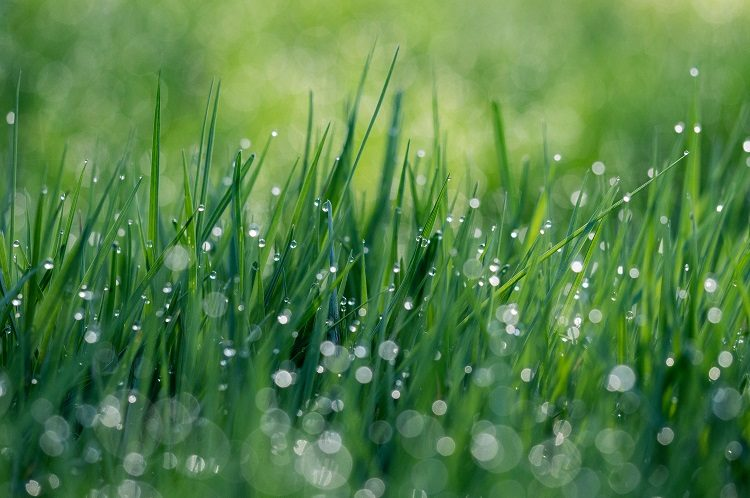 lawn irrigation in summer   how to watering garden in summer