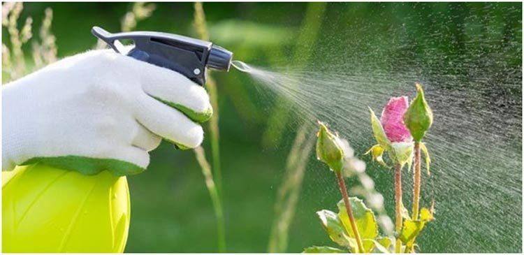 Pest-Controlling-Home-Garden