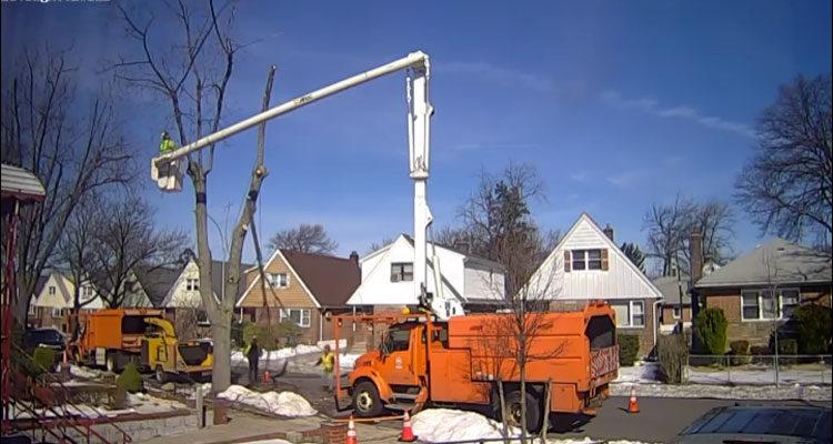 Tree-Removal-Company
