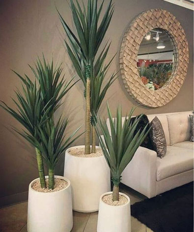 Indoor Decorative Plant Pots