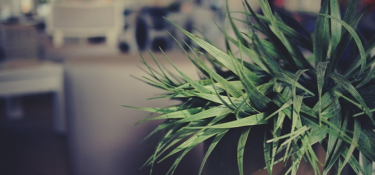choose indoor plants for your home
