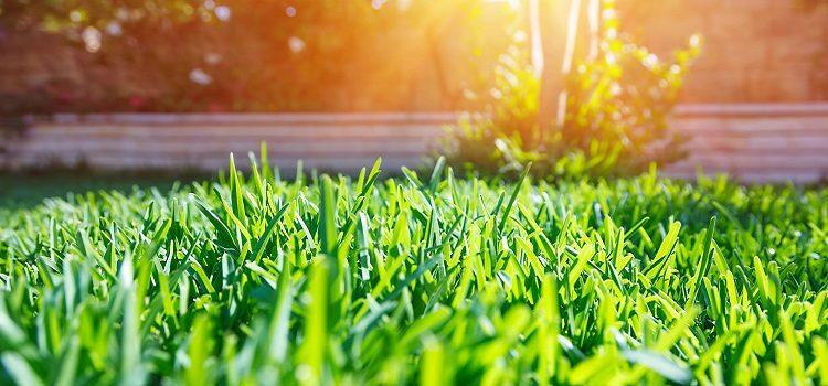 Get Best Lawn home