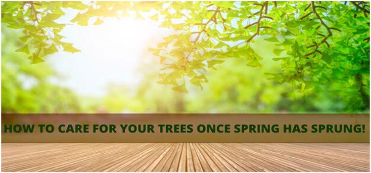 Spring-Tree-Care