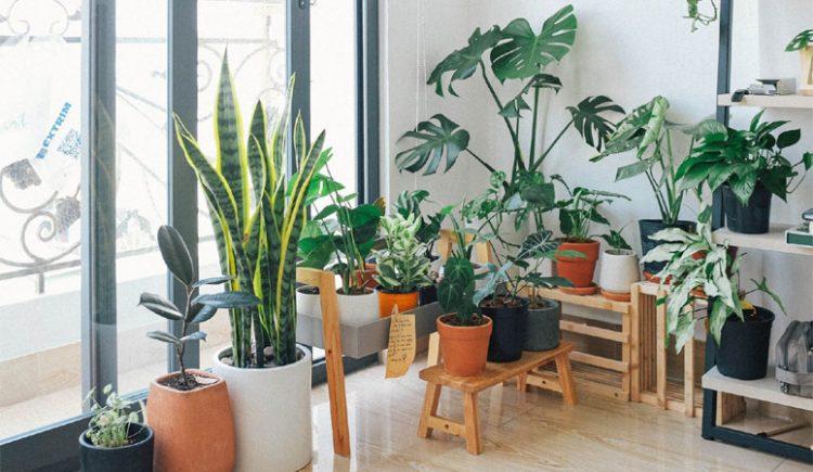 Indoor-Office-Plants