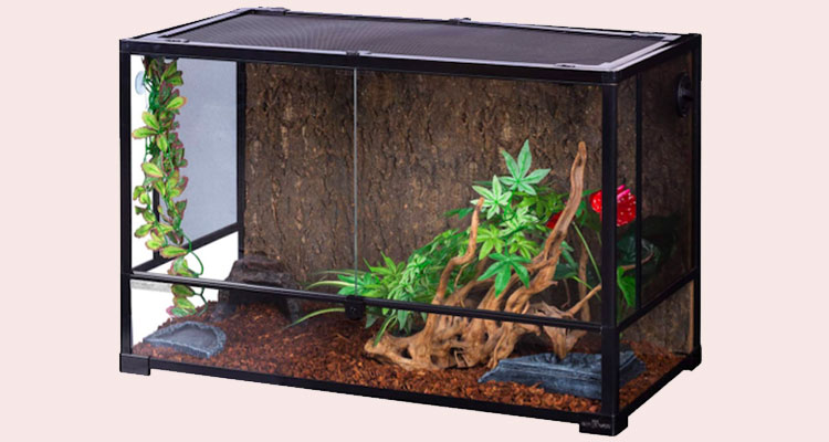 Decor of Ball Python Snake