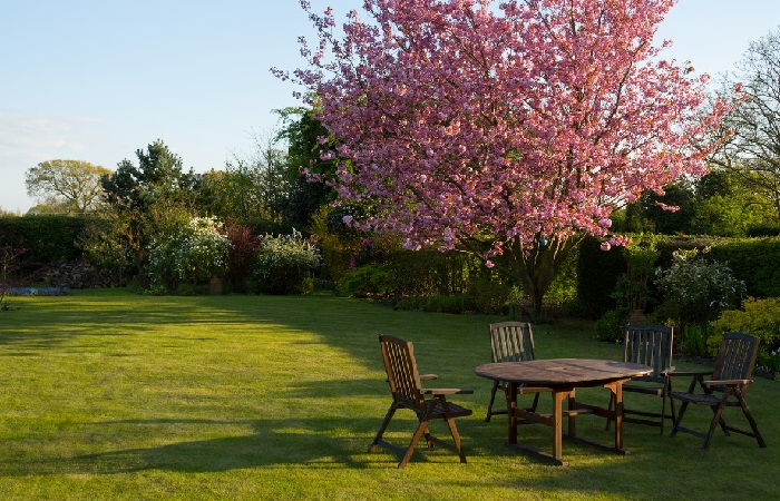 best lawn care tips   tips for lawn care