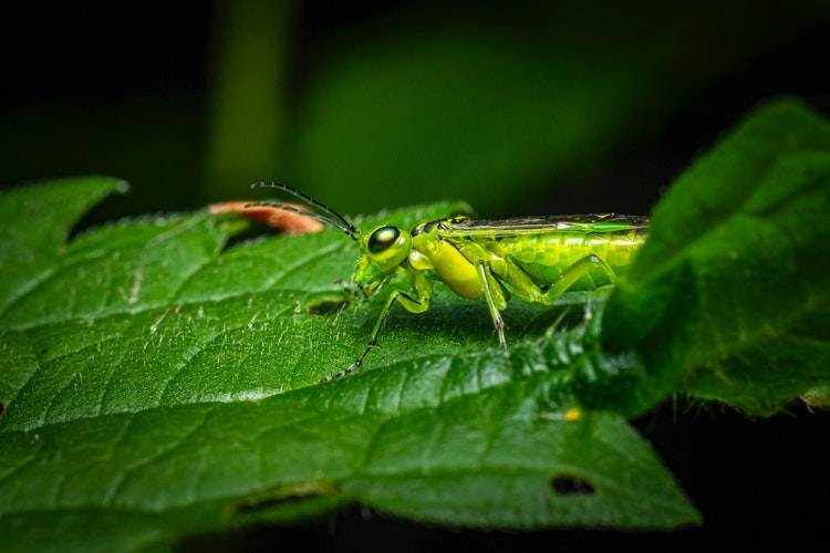 most destructive garden insects | how to protect your plants from them