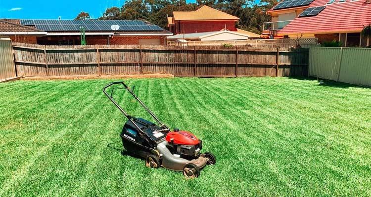 lawn maintenance care